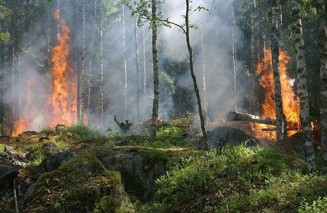 Waldbrandverordnung